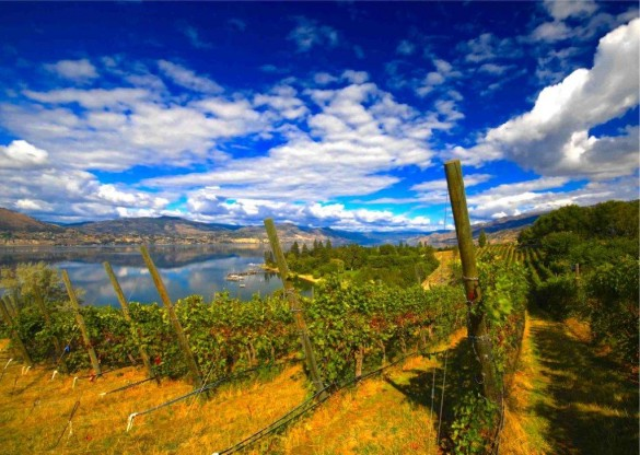 Kettle Valley Vineyard (1)